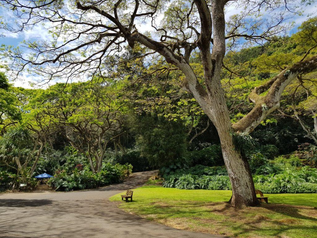 Waimea Valley, North Shore, Hawaii, Oahu