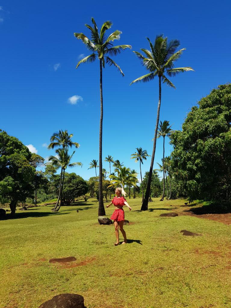 Hawaii, Palmen, Kauai