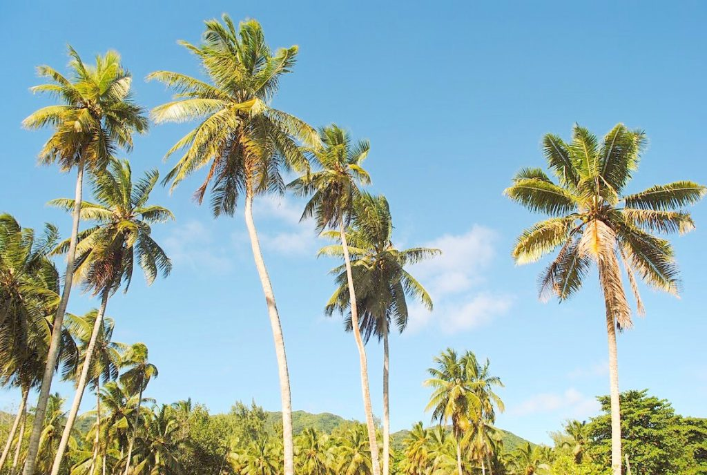 Palmen, Seychellen, Seychelles, La Digue, Inselparadies, Afrika